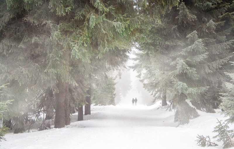 nevicata foresta Franco Matteucci Il mistero del cadavere sul treno